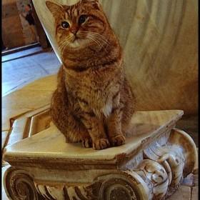 Gli le Chat de Sainte Sophie