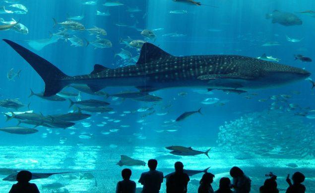Istanbul-aquarium