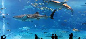 l'Aquarium d'Istanbul - prix musées istanbul 2020