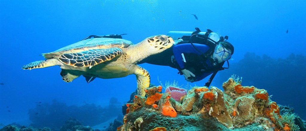 La Plongée-Sous marine-Fethiye